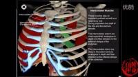 3D教程(最专业,最有效的健身指导)运动呼吸原理解剖及参与肌肉