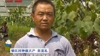 银江村:坚持绿色发展理念 探索农旅结合致富新路
