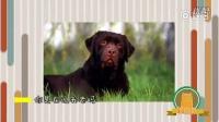萌宠大乐斗分为三个部分,宠物大保健每期都会分享宠物护理知识;百变小咖秀,由视频加配音组成,萌萌地图片