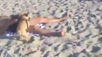 """美国迈阿密有只法国斗牛犬网红""""Gomi"""",上周末主人带它去海边玩耍时,没想到开心的它一看到熟人快步往"""