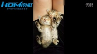 一对可爱的小猫咪睡觉姿势超萌 格力空调静享生活 成都南虹总代