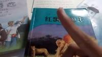 【星辰天秤】辰有书架:动物小说系列专辑,沈大王书籍强势抢镜