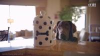 偷吃饼干的小狗