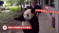 搞笑视频网:成精!熊猫竟然听得懂四川话