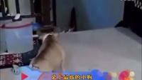 """【轻松时刻】动物也使坏 腹黑""""损友""""伤"""