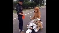 """【搞笑视频】《狗狗开""""出租"""",卧槽,啥意思》笑尿你!"""