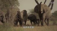 周杰伦最新公益广告《保护动物,拒绝杀害》