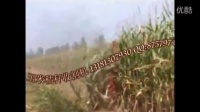 玉米秸秆粉碎设备回收机械收割机打捆机视频