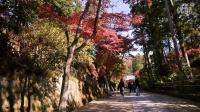 Kamakura - autumn colors镰仓秋之色枫之韵
