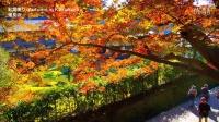 秋の鎌倉の紅葉の名所 Autumn colors in Kamakura 鎌倉観光 日本の紅葉 紅葉便り