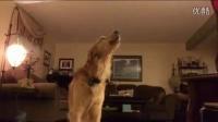 汪星人的爆笑日常:被虐!心疼,我狗!