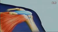 玻璃酸钠(施沛特)关节腔注射方法(流畅)
