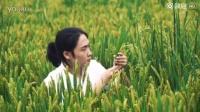90后少年化身农夫,闹市中潜心研究水稻!搞笑视