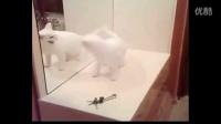 动物看到镜子里的自己的反应5_bilibili