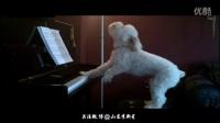 就是这么有才,汪星人我是歌手独奏钢琴曲爱的供养,其他汪做得到吗?
