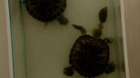 勇敢的小乌龟
