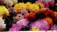 花团锦簇和姹紫嫣红的区别
