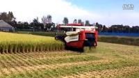 国外水稻收割机的工作过程,强迫症是看爽了
