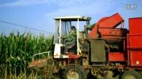 农村玉米收割机收割玉米全过程