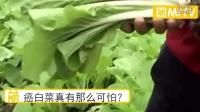 """""""癌白菜""""真的有传说中的那么可怕吗?为何吃过却没有甲醛中毒"""