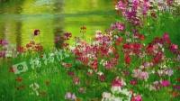 D11005-植物+风景+小溪+红花+流水+溪水