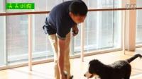 狗狗视频_新概念训狗教程_类似训狗师的小说