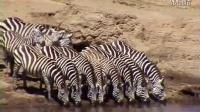 非洲的野生动物VAS斑马107——李小萌模板网