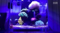 海水缸海水魚珊瑚缸