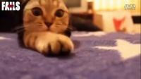看看可爱猫咪与狗狗搞笑视频,开心放松一下