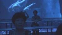 【原创简拍】澳门新濠天地—天幕剧场《龙腾》_标清_0
