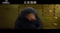 《神奇动物在哪里》嗅嗅大闹银行正片片段