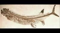 动物世界最大毒蛇_动物世界txt微盘_大自然动物世界全集