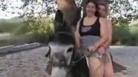 ride pony