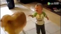金毛是宝宝儿时最好的玩伴,看小主人都乐开花了