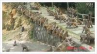 神奇动物在哪里  小猴子 成群 搞笑
