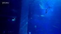 20161203正佳海洋世界美人鱼潜水
