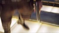 【游民星空】银河护卫队2预告第二发