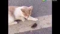 幽默谷 景区拍到的猫和老鼠LW2