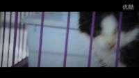 《假如你是一只猫》保护动物公益宣传片