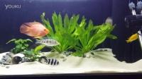 金龙鱼和三湖鱼混养