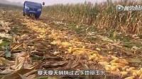 韩宝仪《粉红色的回忆》改编成小女孩《掰玉米之歌》