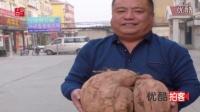拍客:山东淄川农民种出红薯王 最大28.6斤重