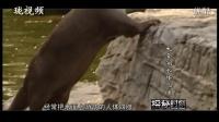 纪录片:大金湖水怪之谜