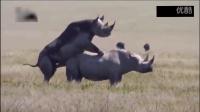 外国拍摄师拍到动物世界很神奇的一帘,犀牛身躯太大也真的太大了
