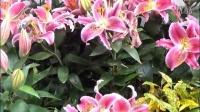 杭州郭庄  美丽花卉  下