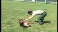 西安哪里可以训狗-训狗基础教程