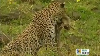 高中动物世界作文_动物世界野马的繁殖_有动物世界的电视台