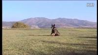 大小便小狗衣服的制作图片-训狗教程视频