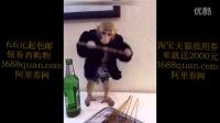 猴子喝酒视频   2017微信小视频