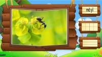 看图识物 第21集 蝗虫蚂蚁蟋蟀